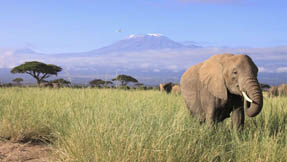 A lone elephant stands in the foreground with the magnificent Mount Kilimanjaro in the back
