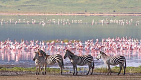 A waterhole frequented by flamingos and zebras